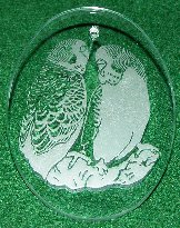 Budgies Etched in Glass