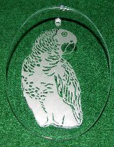 African Grey Etched in Glass