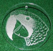 Macaw Etched in Glass