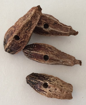 Click for a larger photo of the Mahogany Beans